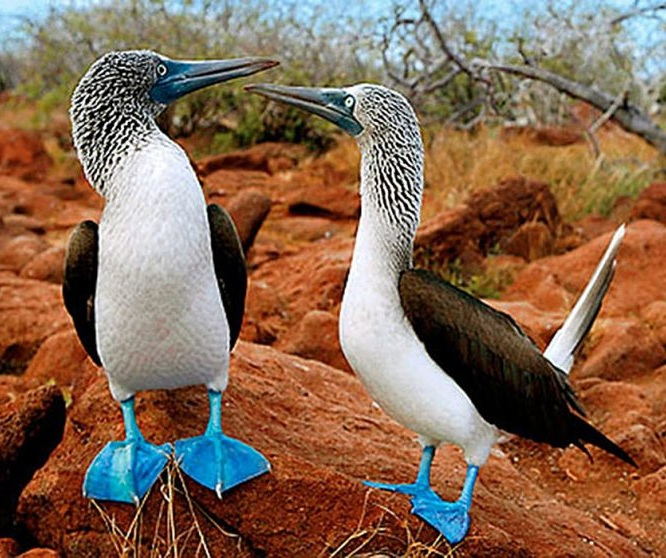 Animals in Galapagos - Travel Ecuador | Quirutoa
