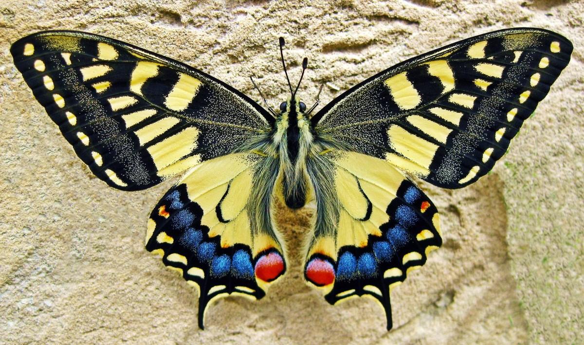 butterfly-1228639_1920