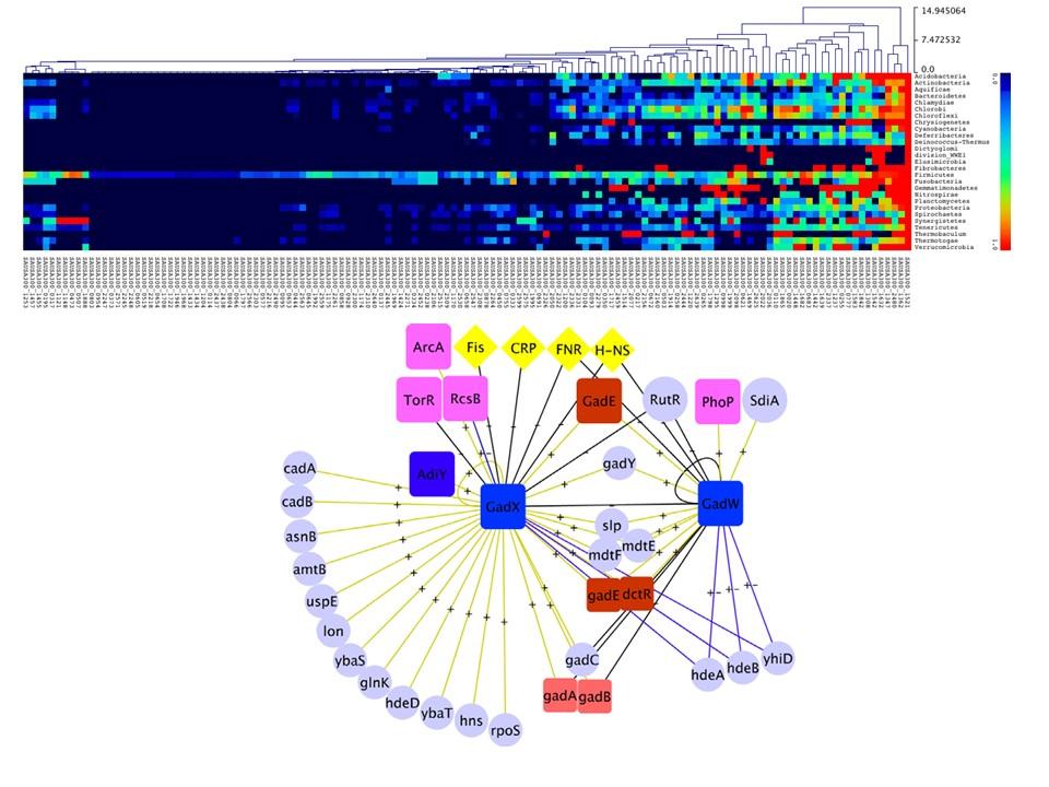Análisis bionformático en Bacterias de interés biotecnológico y/o médico para identificar a los determinantes de la expresión genética