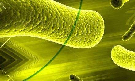 """Esos pequeños microbios llamados """"Arqueas"""""""