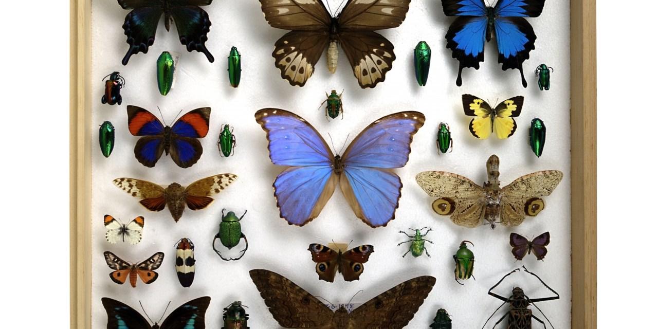 De la clasificación natural a la manipulación genética
