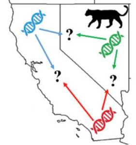 Utilización del ADN para la identificación de especies.