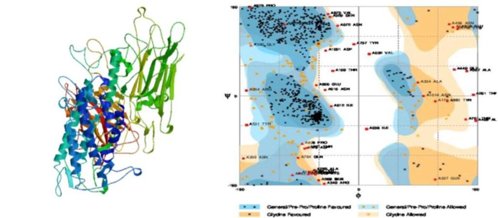Figura 1 . Modelo 3D de nuestra proteína con el mejor ajuste de residuos y su respectivo gráfico de Ramachandran.
