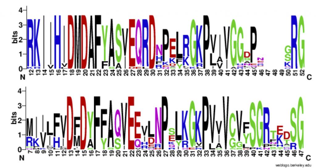 Figura 1. Sequence logo de los alineamientos múltiples de las secuencias de proteínas mesófilas y termoestables, respectivamente.