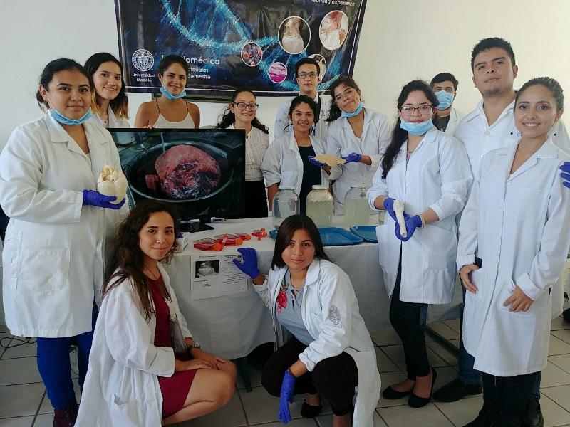 Tissue Engineering. Descelularización de órganos para la obtención de andamios. 6° IBM