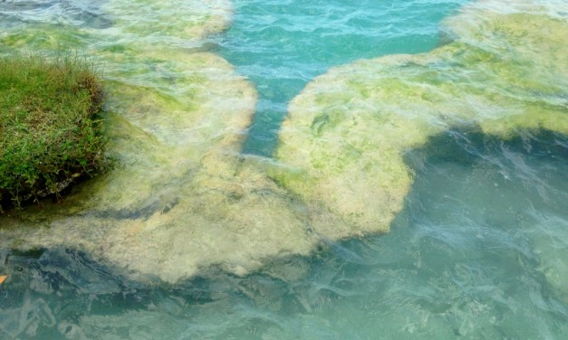 Esas formaciones microbianas maravillosas llamadas estromatolitos