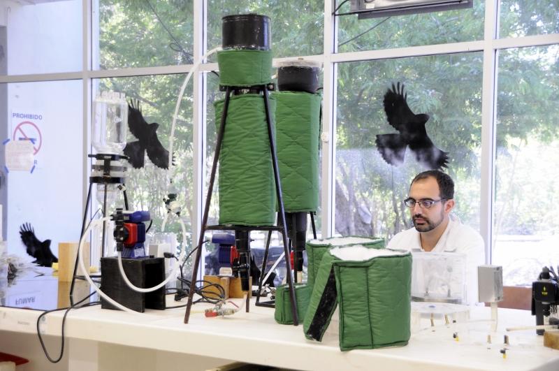 Científicos del CICY producen biogás a partir de sargazo
