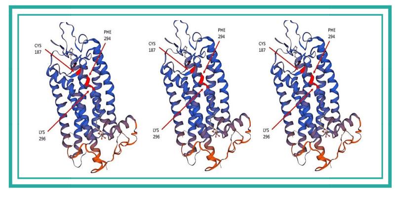 Las proteínas opsinas en organismos modelo