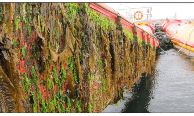 ¡Invasión! El lado oscuro de los epibiontes marinos formadores del fouling… Hacia una posible solución