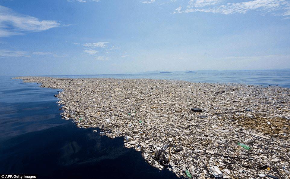 ¿Es posible que el plástico se biodegrade?