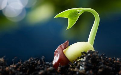 Episode 23 – Planting the seeds of local agriculture
