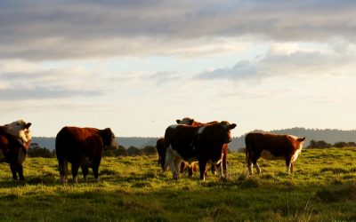 Episode 46 – Richard Teague: the Science of Holistic Grazing