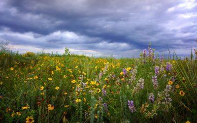 Episode 66 – Restoring Public Lands Through Grazing