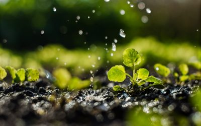 Episode 80 – Funding the Science of Regenerative Agriculture
