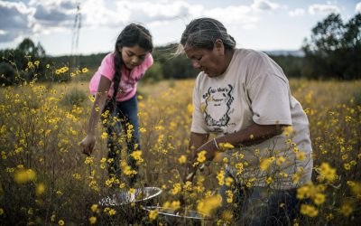 Episode 81 – Renewing Native American food traditions