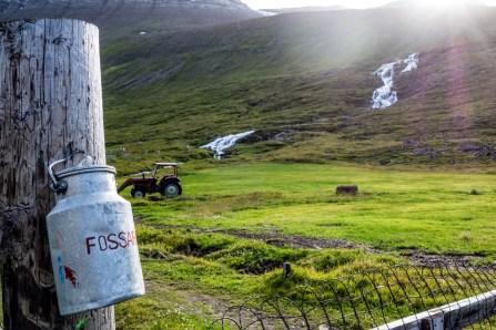 Dairy Farm Near Isafjordur