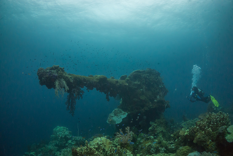 Underwater wreckage covered in coral with diver.