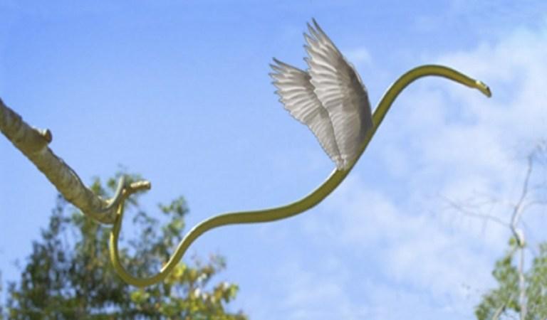 ➤ Sonhar Com Cobra Voando – O Verdadeiro Significado
