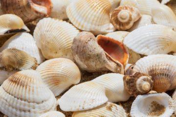 várias conchas na praia