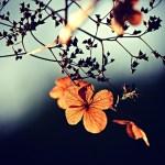 flores nos galhos de uma árvore