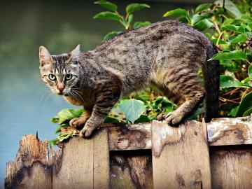 gato macho em cima da cerca
