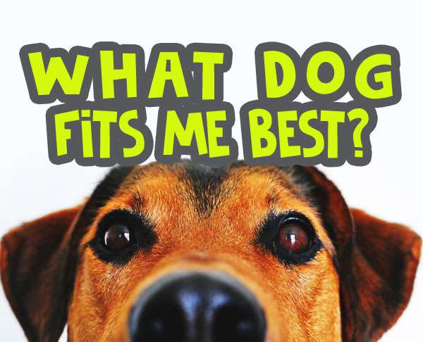 What Dog Fits Me Best Quiz 2020 Best Dog For Me