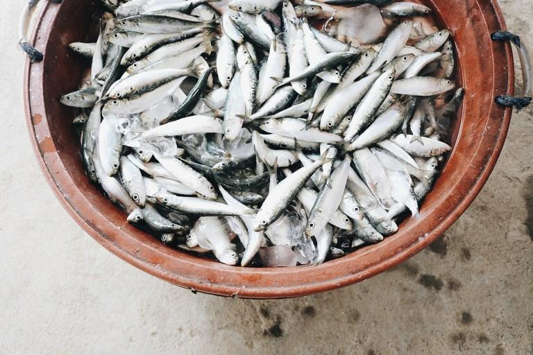 Bầy cá trong xô đựng cá