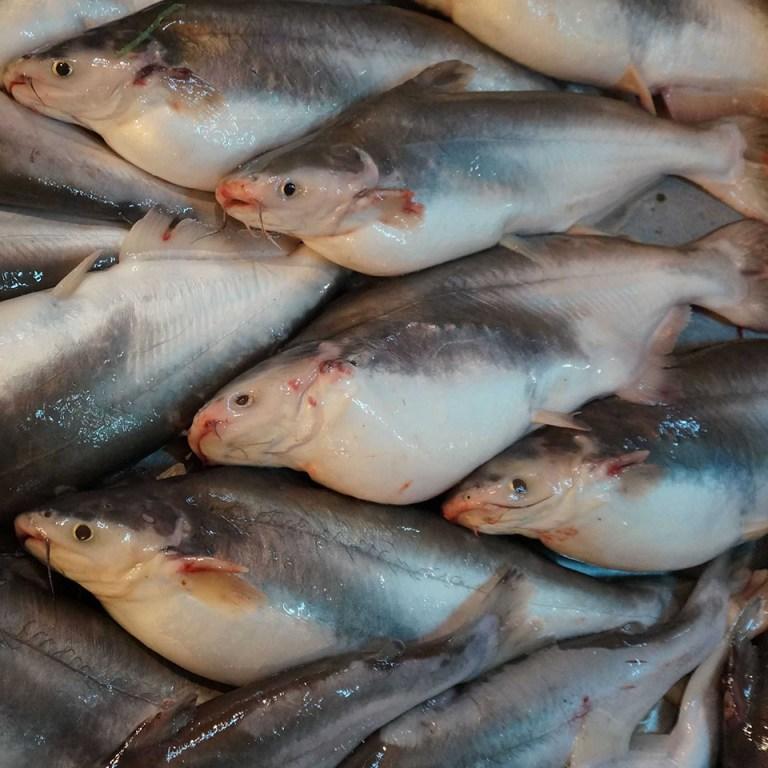Cá ba sa tươi