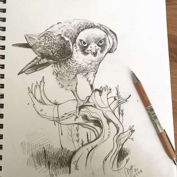 Thanks @htleephotography  for inspiration :) #peregrinefalcon #sketchbook #sketch