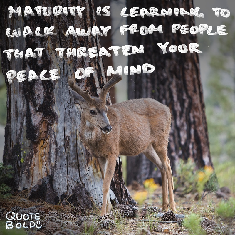 peace mind quotes maturity