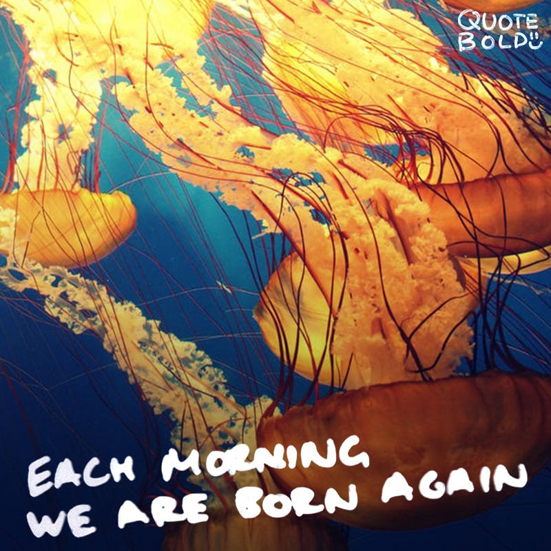 good morning quotes each morning born again
