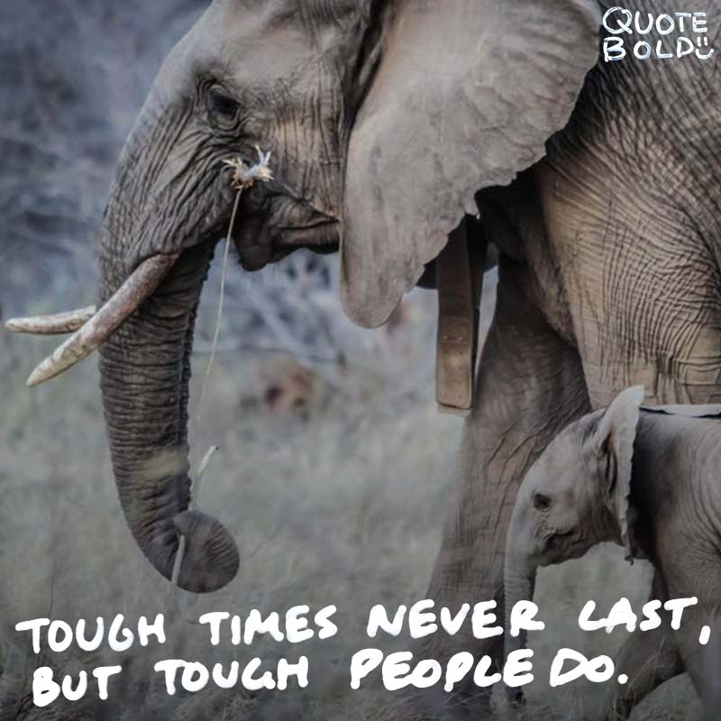"toughness quote ""Tough times never last, but tough people do."" - Dr. Robert Schuller"