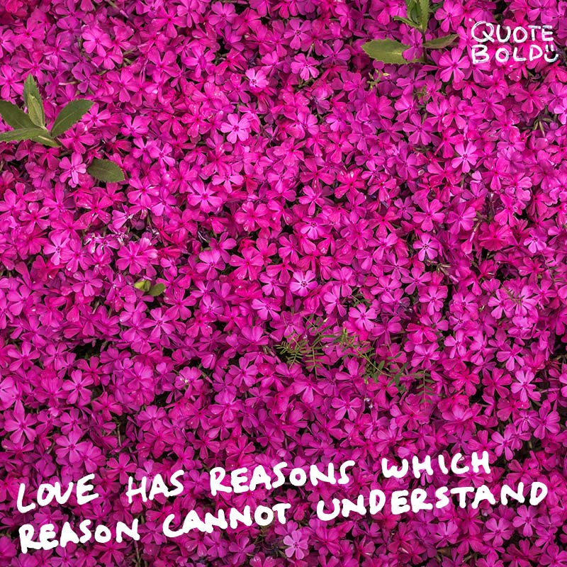"wednesday love quotes ""Love has reasons which reason cannot understand."" - Blaise Pascal"