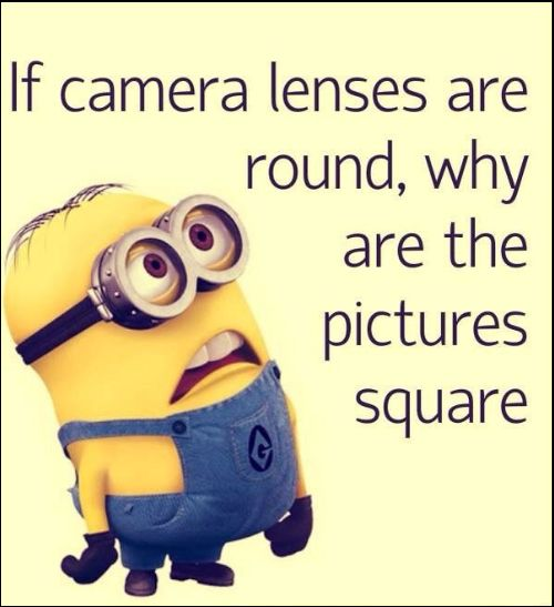minion quotes for kids