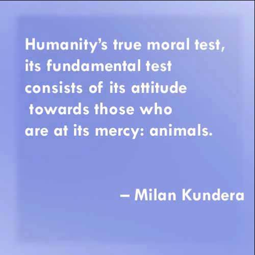 quotes on humanity and compassion