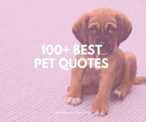 best pet quotes