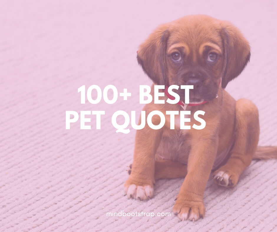 100+ Funny & Inspirational Pet Quotes and Sayings ...