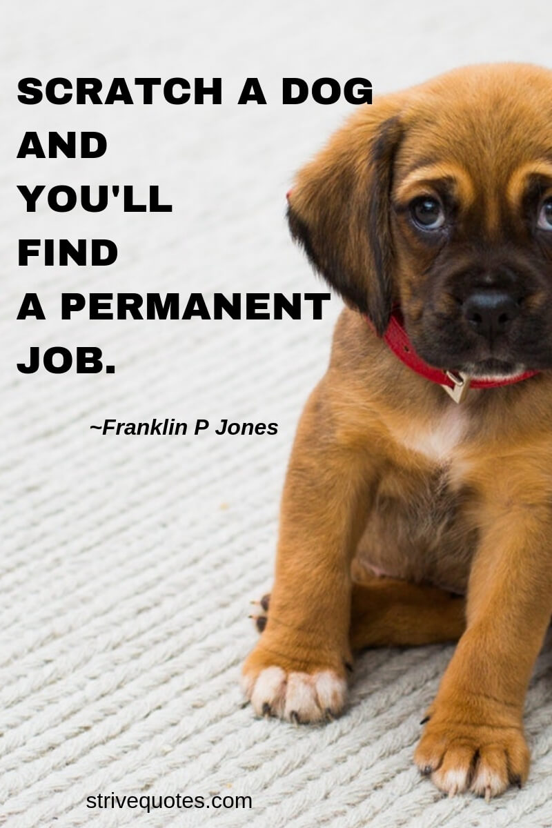 100+ Funny & Inspirational Pet Quotes and Sayings - MindBootstrap com