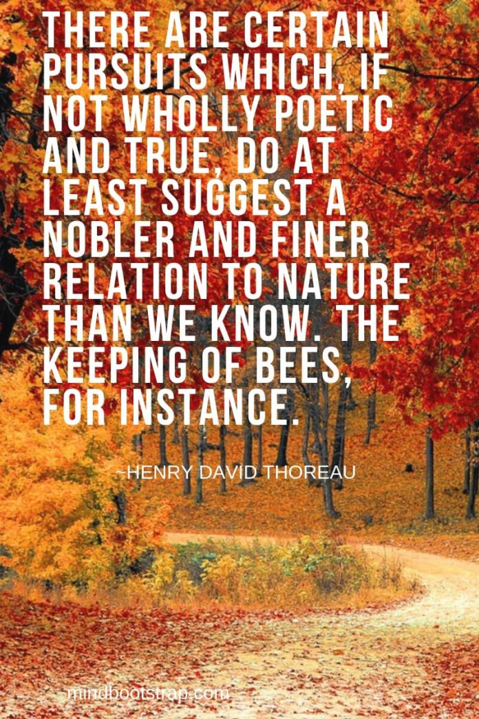 Henry David Thoreau Quotes About Nature | There are certain pursuits which, if not wholly poetic and true, do at least suggest a nobler and finer relation to nature than we know. The keeping of bees, for instance. -Henry David Thoreau
