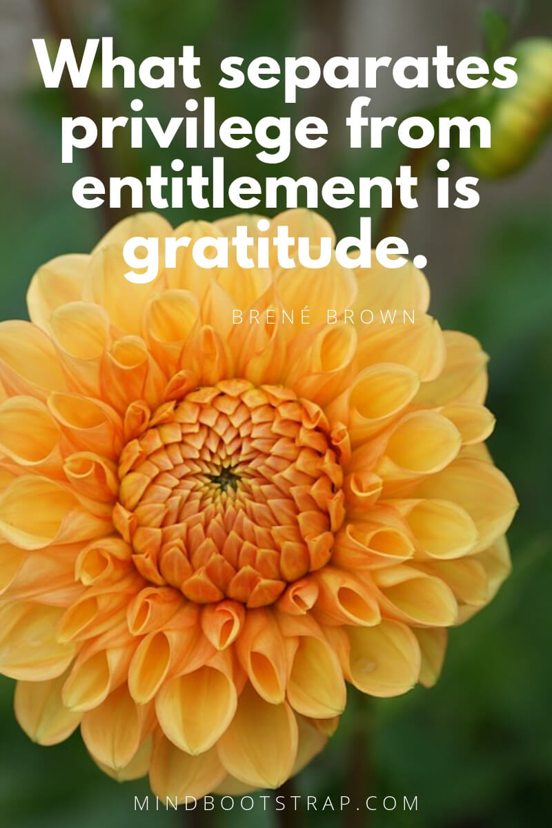short gratitude quotes - What separates privilege from entitlement is gratitude. ~Brené Brown