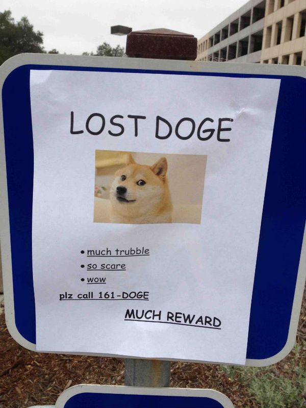 50 top doge meme graphics images funny pictures quotesbae funny lost doge meme picture solutioingenieria Choice Image