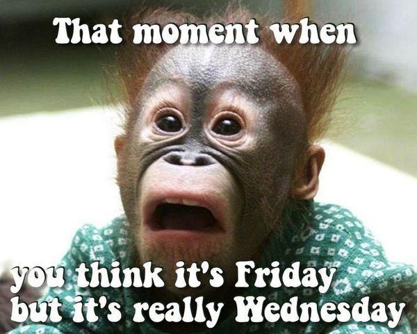 Hilarious wednesday hump day meme image