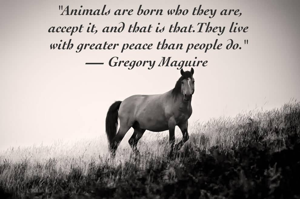 Love Animal Quotes Stunning Love Animal Quotes 07  Quotesbae