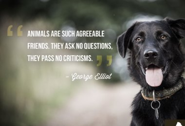 Quotes About Pets And Friendship Fair Quotes About Friendship And Love 08  Quotesbae