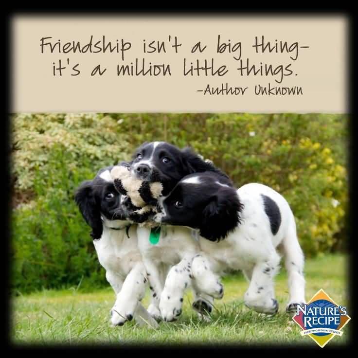 Quotes About Dog Friendship Magnificent Quotes About Dog Friendship 17  Quotesbae