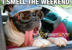 Amusing weekend party meme jokes