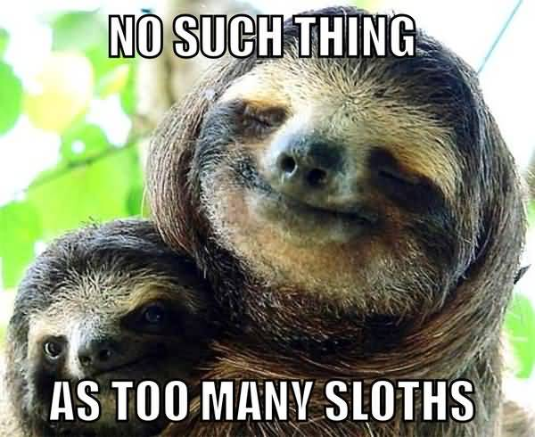 Funny amazing sloth love meme picture