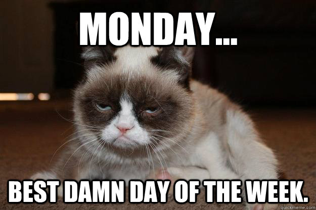 Monday Cat Meme Funny Image Photo Joke 05