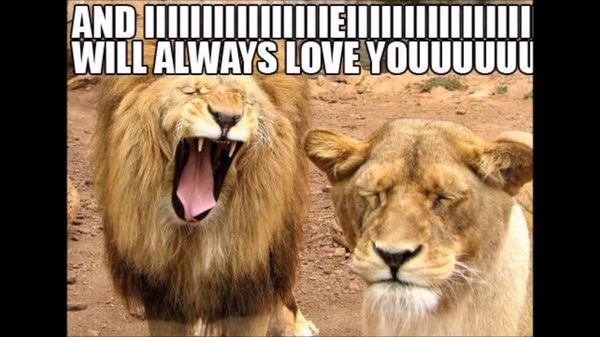 Very funny memes about love image
