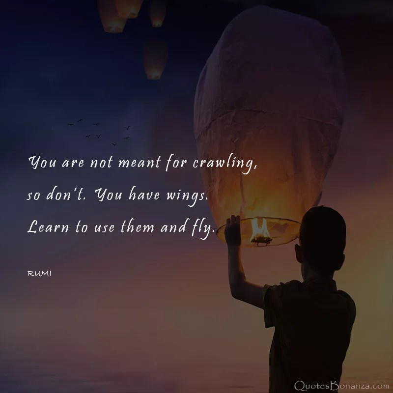 learn-fly-quote-rumi